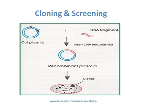 protein expression recombinant protein expression in ecoli
