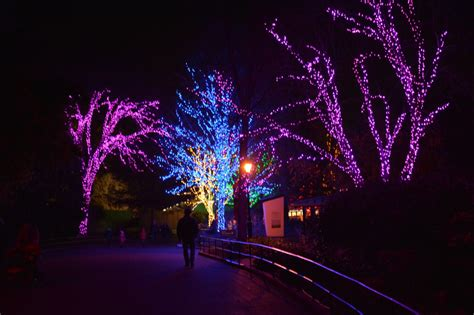 metro zoo lights zoolights at the national zoo kid trips family travel