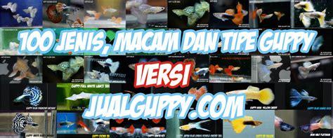 Pakan Ikan Gapi Hias hewan indonesia dan jual beli