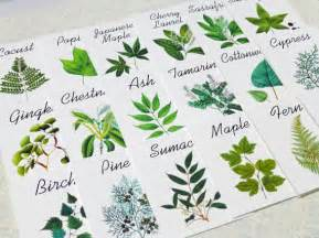 Wedding table name ideas via emmalinebride by leaf decor