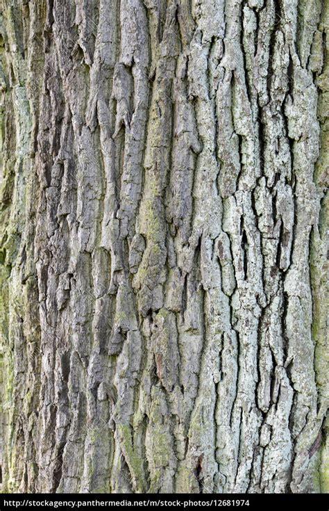 Rinde Der Eiche by Natur Hintergrund Baum Baumstamm Stamm Laubbaum Rinde