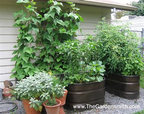 Vegetable Garden in Containers   Eclectic   Landscape