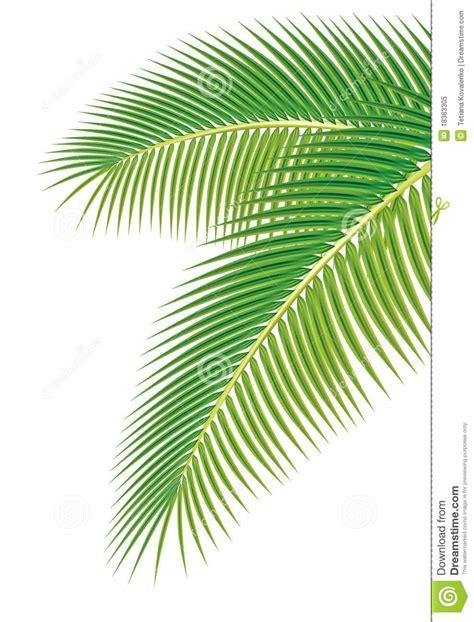 Daun Paya Black 1 bl 228 tter der palme auf wei 223 em hintergrund lizenzfreies