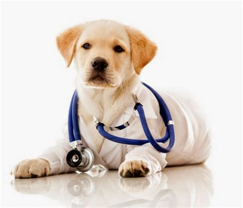 dogs health pet supplies for dogs and cats rosyandrocky health problem what causes them