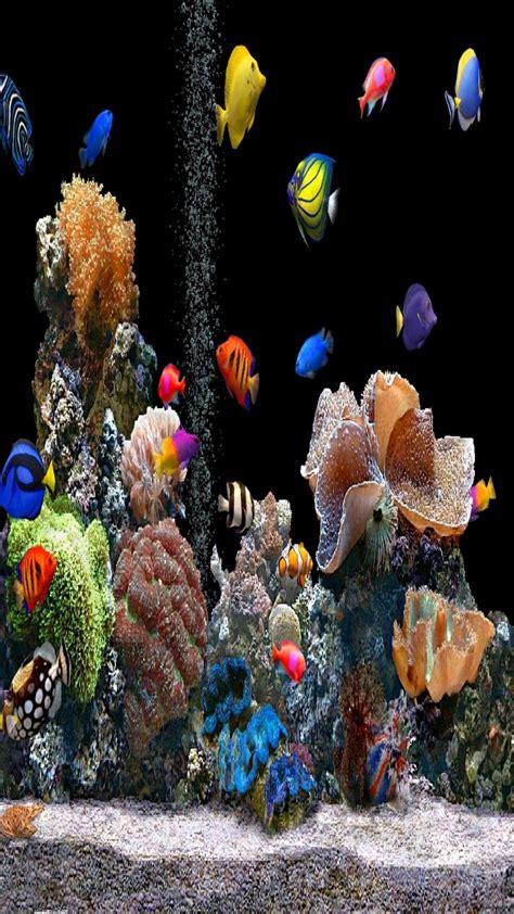 aquarium wallpaper  mobile gallery