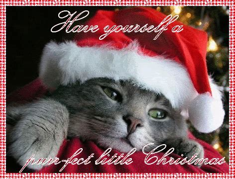 purr fect  christmas pictures   images  facebook tumblr pinterest
