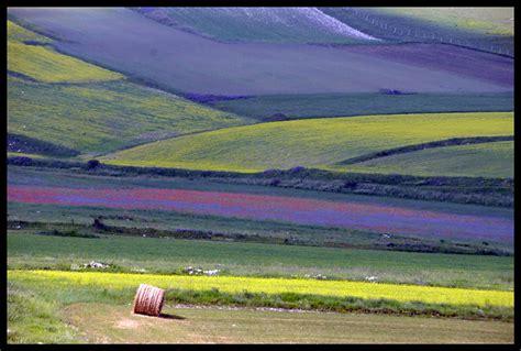 foto di prati in fiore treklens ancora prati in fiore photo