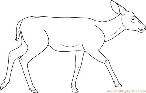 Mule Deer Coloring Page Free Deer Coloring Pages Mule Deer Coloring Page