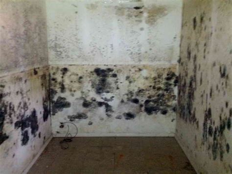 cleaning mold in bathroom walls how to remove mold from bathroom walls january 08 about website 3 ways to prevent