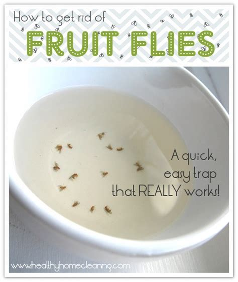 how to get rid of fruit flies in bathroom how to get rid of fruit flies cute diy projects