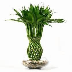 Best Deal On Sofas Tropical Indoor Plants Unique Home Designs