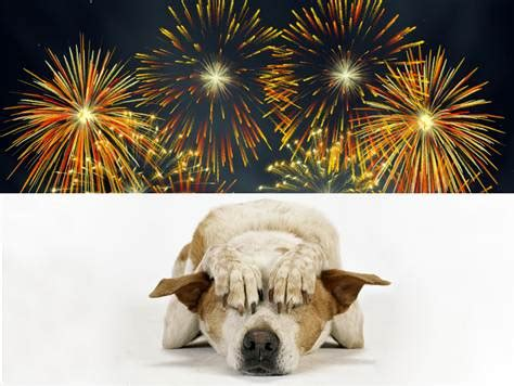 how to comfort dogs during fireworks understanding your dog s fear of noise doggymom com