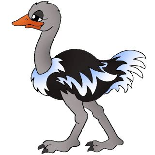 ostrich clipart ostrich clipart animal images