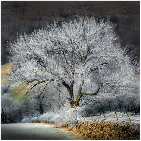 frosted trees frosted tree sherwood photographs
