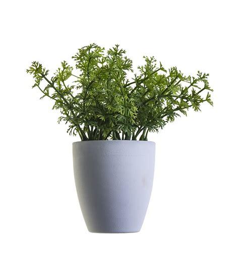 Bild Mit Echten Pflanzen by Free Photo Plant Green Sheet Nature Plants Free