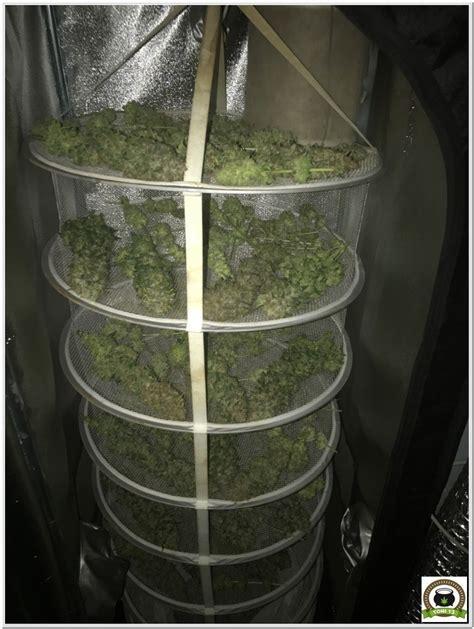armario de interior  cultivo de marihuana dark box