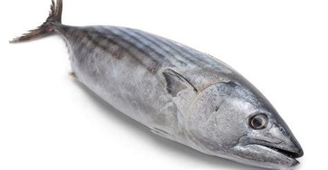ayo makan ikan ikan tongkol ternyata bisa mencegah stroke