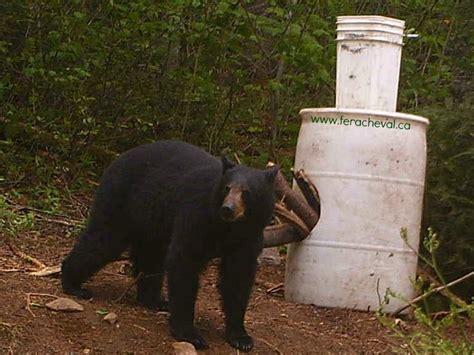 regarder vf la chasse à l ours r e g a r d e r 2019 film observation et chasse 224 l ours noir au fer a cheval