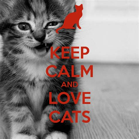 and cats keep calm and cats poster amibunz keep calm o matic