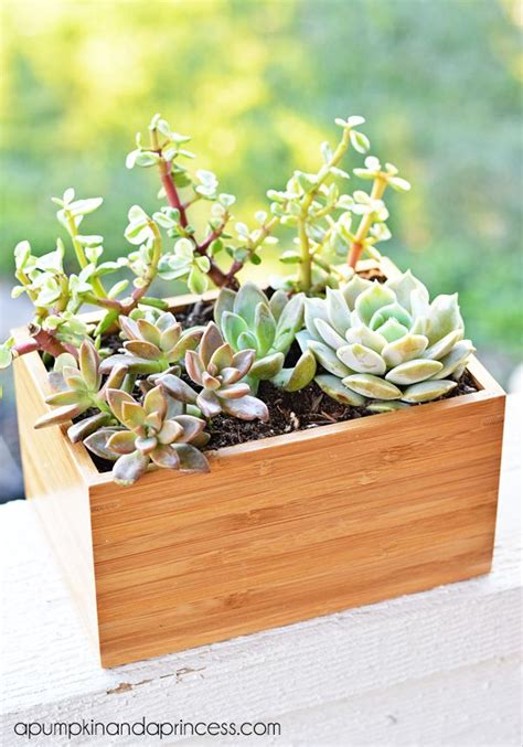 succulent planter box succulent planter box ikea hack