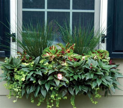 patios in bloom products