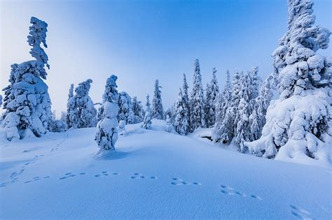 winter images images finland nature winter snow trees