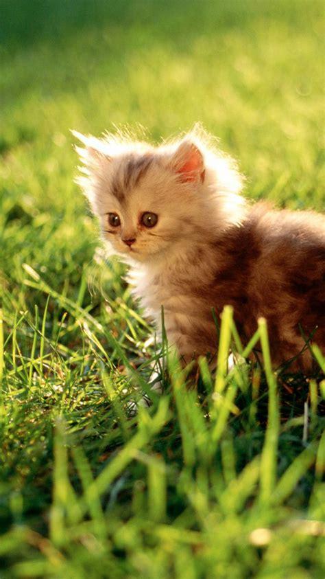cute cat featured iphone  wallpaper hd iphone litle pups