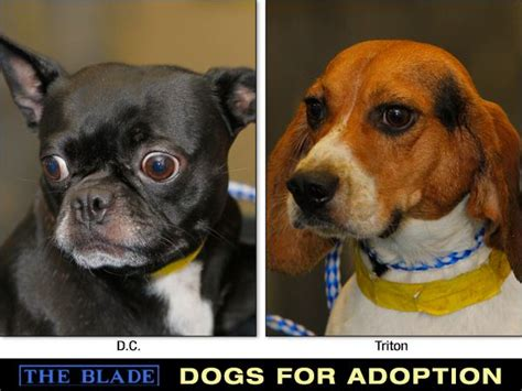 adopt a service that failed lucas county dogs for adoption 10 2 the blade