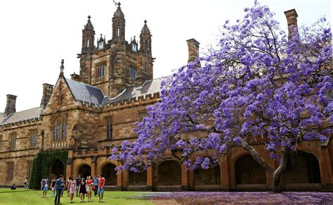 best universities in sydney sydney ranked 1 among innovative universities the