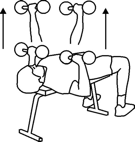 proper dumbbell bench press form dumbbell bench press best exercise for chest muscles