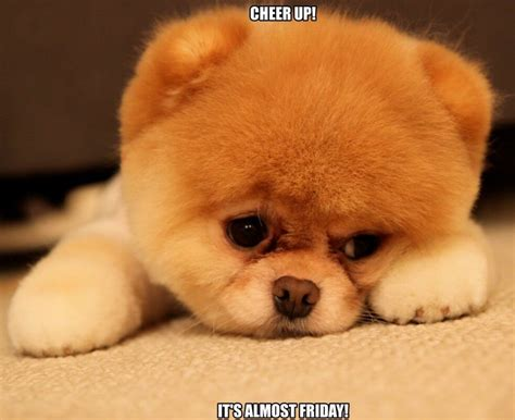 Cheer Up Meme - top 21 cheer up meme s that ll instantly lift your mood