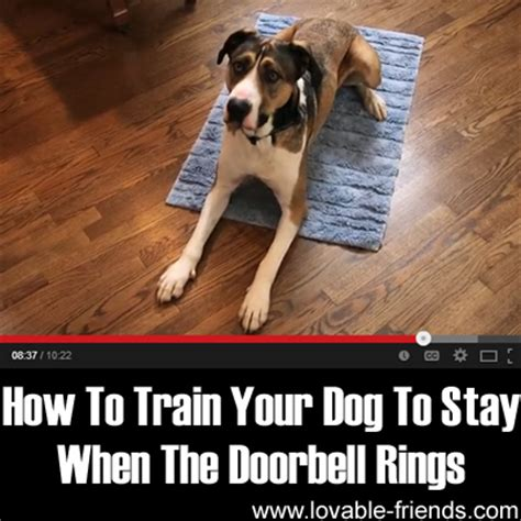 how to a puppy to stay how to your to stay when the doorbell rings lovable friends