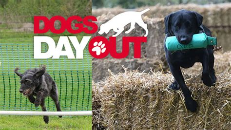 dogs day out dogs day out at swanbourne house school mk pulse magazine