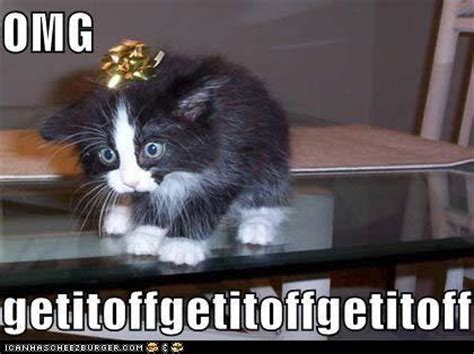 Funny Christmas Cat Memes - jokes laughs funny animal pictures 5