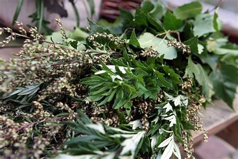New Feragamo Estonia Flora Seprem 17 Best Images About Baltic Nature Flora And Fauna On