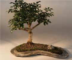 indoor tree low light decorating small spaces using house plants