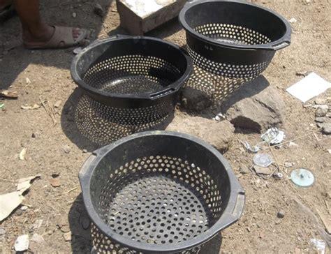 Bibit Lele Ukuran 11 12 ember untuk memanen bibit lele dan mensortir sesuai ukuran