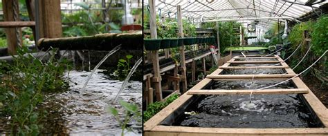 a guide to backyard aquaponics
