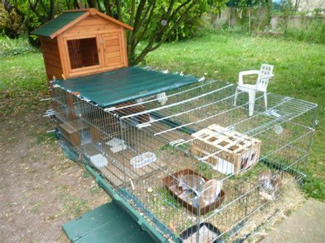 enclos ext 233 rieur pour mes lapins nains forum rongeurs