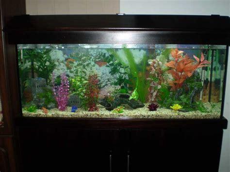 aquarium design for guppies bl system how many fish in a 55 aquaponics tank info