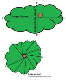 Tree Canopy Definition by Tree Crown Measurement