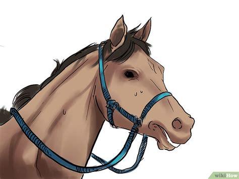 Halter Tali Kuda cara melatih kuda wikihow