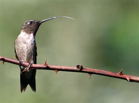 for the birds all about hummingbirds the hour