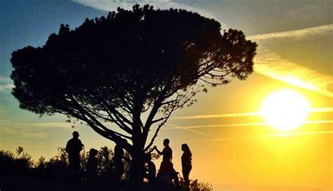 tree los angeles l a s wisdom tree an enduring landmark an epic view