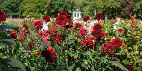 Britzer Garten Dalien by Britzer Garten Aktivit 228 Ten Im Bei Sch 246 Nem Wetter