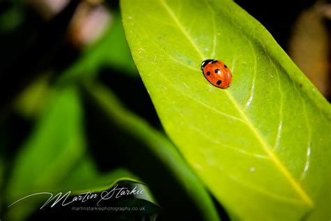 Landscape Photography With Macro Lens Garden Macro Landscape Still Nature Photography
