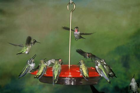 decorative bird feeders windsong wind chimes blog
