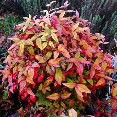 ordinario Aiuole Da Giardino #1: colori-invernali-per-aiuole-fredde_NG3.jpg