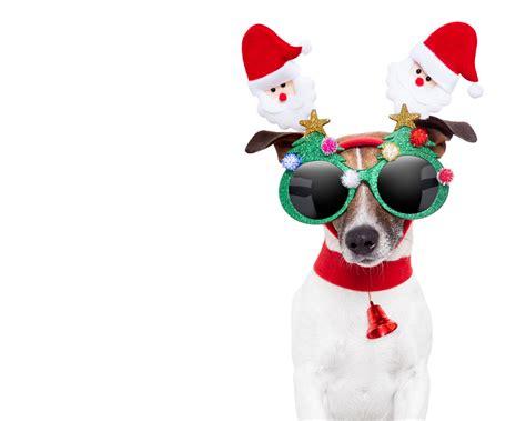imagenes de animales navidad fondos navide 241 os mascotas navide 241 as 1280x1024