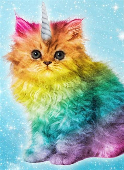 Cat Rainbow Meme - unicorn rainbow cat about unicorns on pinterest